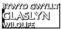 Bywyd Gwyllt Glaslyn Wildlife