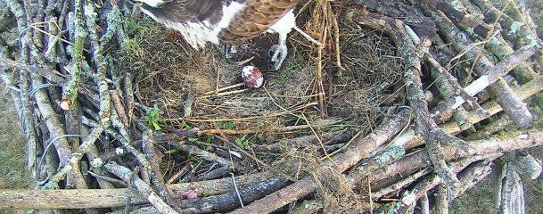 5F egg New Nest_2018-04-28_06_18_39_537
