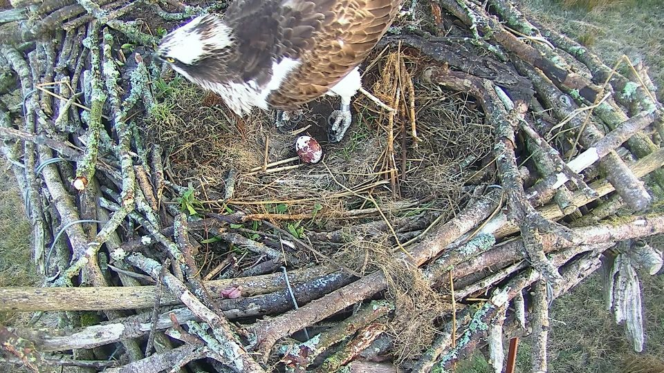 5F egg New Nest_2018-04-28_06_18_39_537