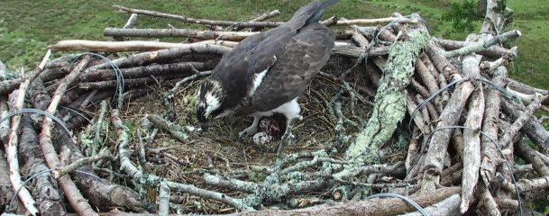 Second Egg Nest Q6035_2018-04-22_10_02_36_927