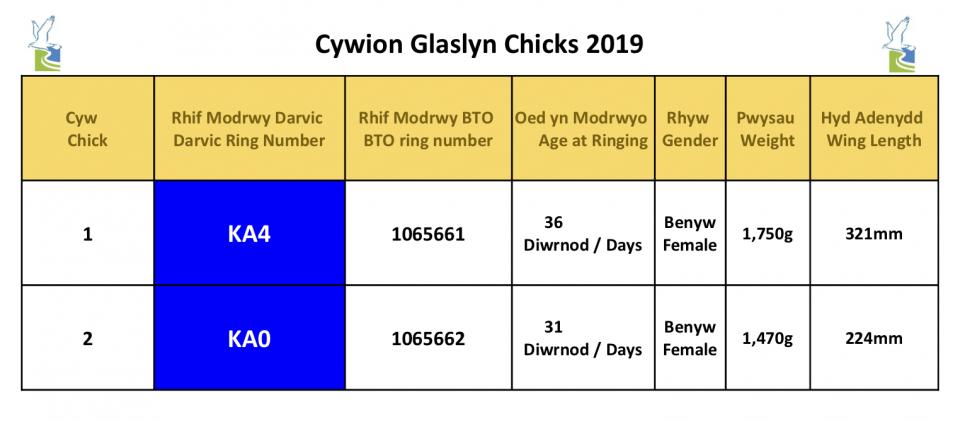 Glaslyn Ringing 2019+CYM